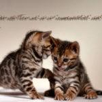 image of two lovely kittens