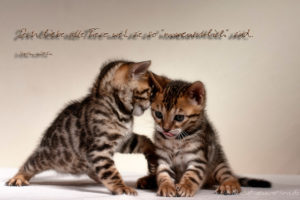 image of two lovely kittens