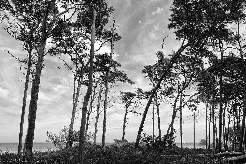 Photo. 2014. Ostsee, Halbinsel Darss. Blick durch den Wald auf´s Meer.