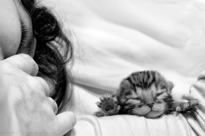 Bild Frau und Katzenbaby