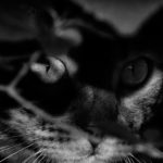 image of an bengalcat in th shadow. black n white