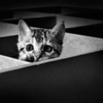 image of an young bengalcat. black n white