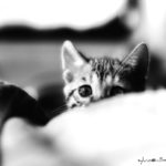 Image of an Kitten in the bed. black n white