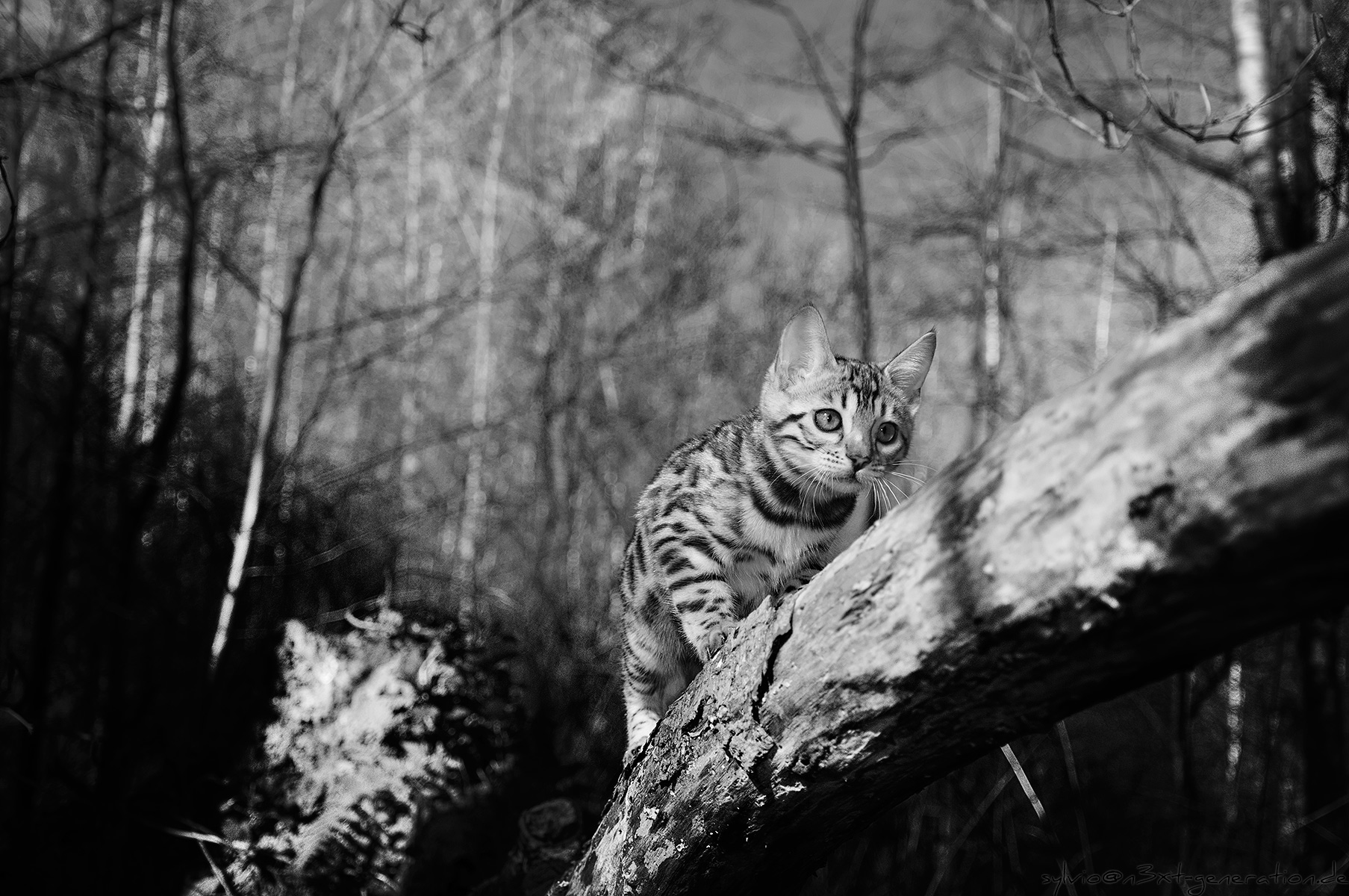 image cat in the woodlands