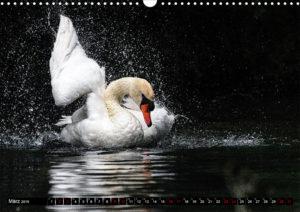 image. Kalenderblatt. Schwan.