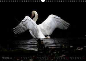 image.preview.calendar. swan