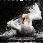 image.preview.Bild.Vorschau. Kalender